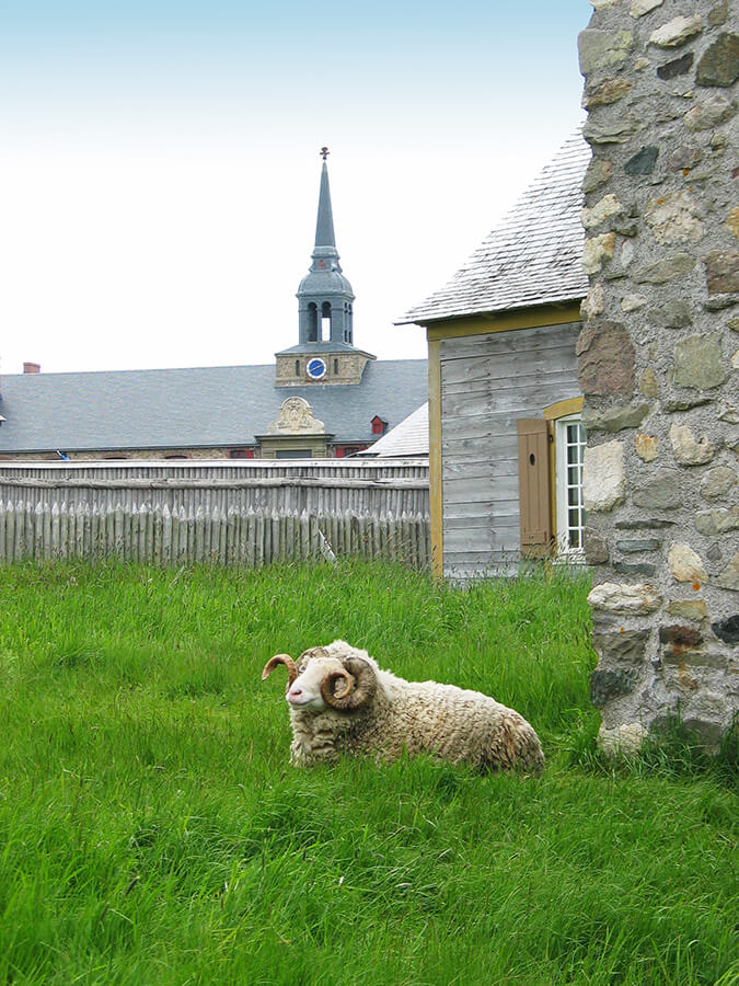 Ram sitting in front of the restored French fort in Louisbourg.  A must for history lovers planning their trip to Nova Scotia!