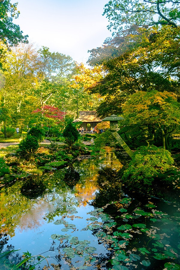 The beautiful Japanese garden in Den Haag in fall. This beautiful garden located in the Clingendael Park is only open for around two weeks in fall!