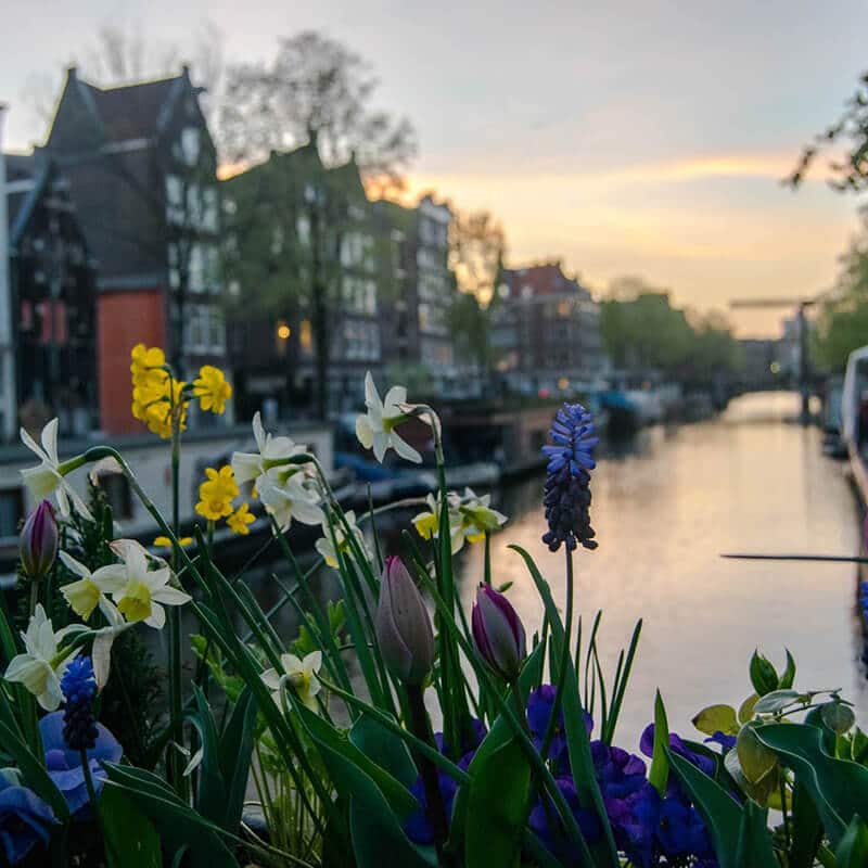 Beautiful sunset along Brouwersgracht, one of the best kept secrets of Amsterdam.  This beautiful canal in the Jordaan can't be missed! #travel #amsterdam #netherlands #holland #nederland #sunset