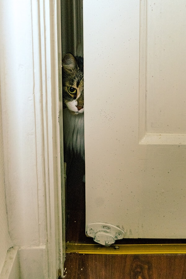 Cat peering into door during the initial adjustment period!