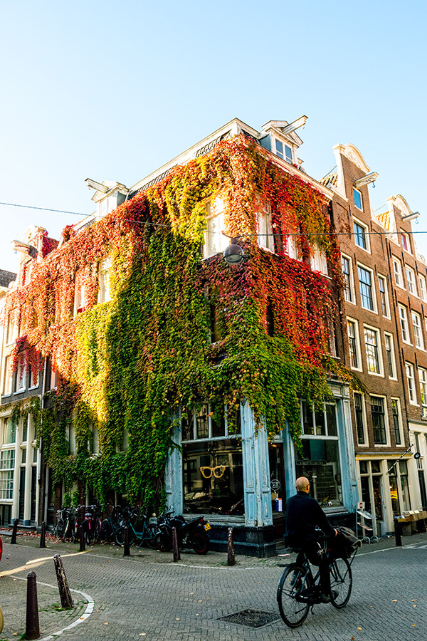 Beautiful ivy covered house in the Jordaan Amsterdam with a man biking past.  You can't miss these secret spots in the Jordaan! #travel #holland #amsterdam #netherlands #nederland
