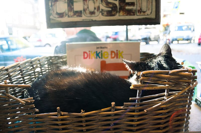 An adorable shop cat in Amsterdam sleeping at the PIQNIQ cafe!