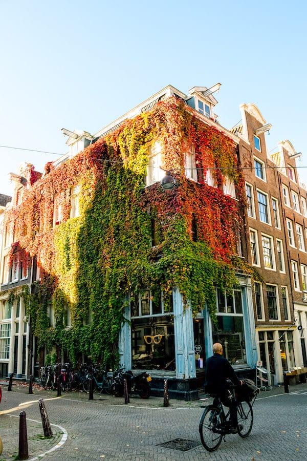Beautiful ivy covered building in the Jordaan along one of the prettiest streets in Amsterdam that you won't want to miss! #amsterdam #netherlands #holland #travel
