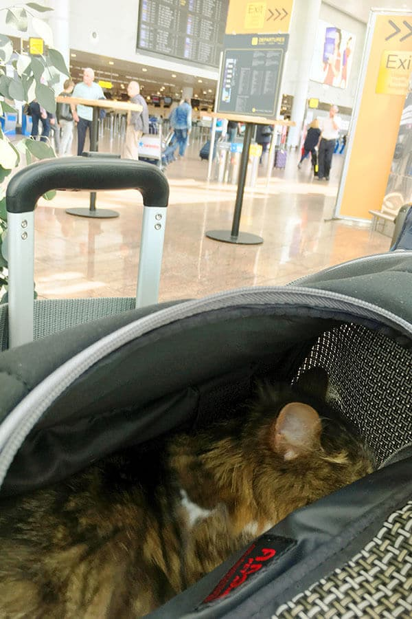 Cat in an airplane-friendly carrier within an international airport.  Traveling abroad with your cat doesn't need to be difficult! #travel #cats #pettravel