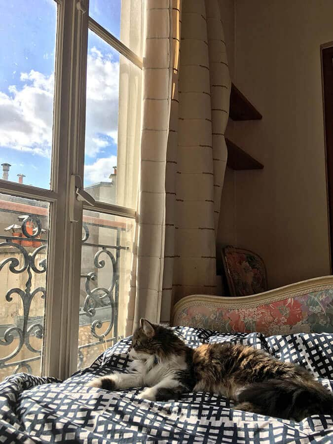 Cat in Paris.  Read tips for what to bring when traveling internationally with your cat! #travel #cat #pettravel