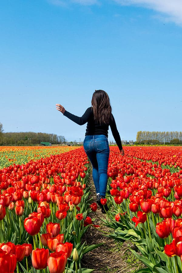 Girl in the tulip fields near Keukenhof Gardens in Holland. Beyond Keukenhof, you'll find many other Dutch tulip fields without the crowds! #travel #holland #tulips #keukenhof #amsterdam