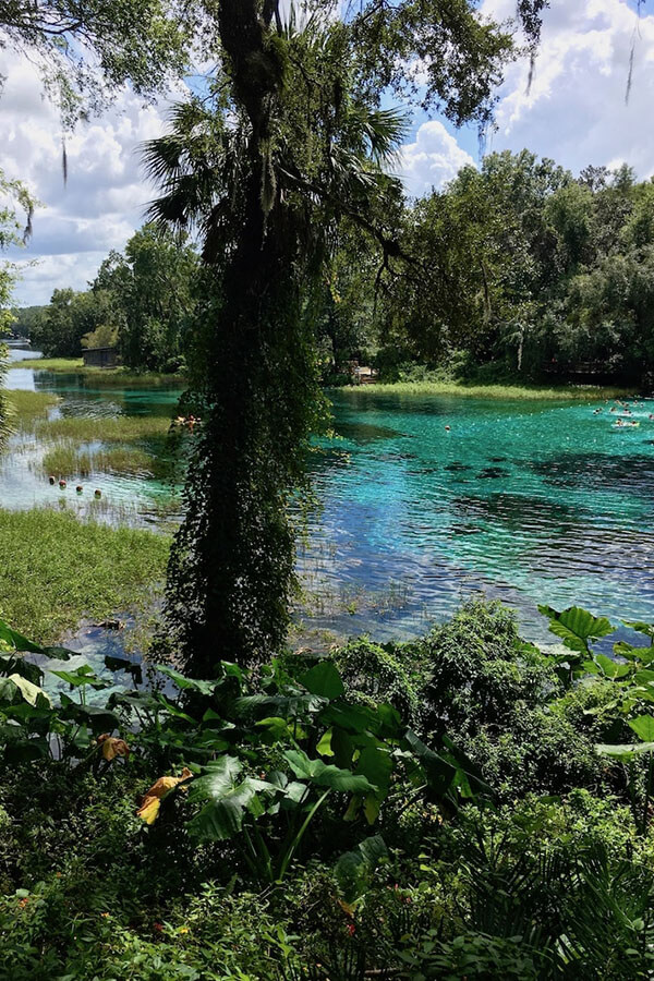Beautiful clear water at Rainbow Springs, a beautiful family-friendly day trip from Orlando, Florida.  This budget day trip is perfect for a nice swim! #travel #florida #orlando