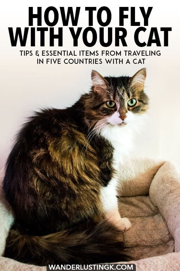 Considering flying with your cat? Tips from an experienced traveler (who has traveled in five countries with a cat) in terms of flying with cat international and essentials for flying with cats. #cats #pettravel #cattravel