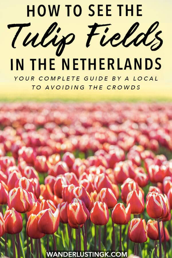 Dreaming of seeing the tulips near Amsterdam? Your complete guide by a local on how to see the tulip fields in the Netherlands for free. Avoid Keukenhof and follow these tips to see the Dutch tulips for free! #travel #holland #keukenhof #amsterdam #tulips #netherlands