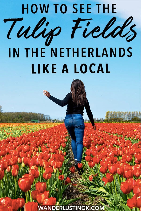 Dreaming of seeing the tulip fields in the Netherlands? Your complete guide to seeing the tulips in the Netherlands no matter where you go written by a local. Includes tips for seeing the Dutch tulips on a budget day trip from Amsterdam! #travel #holland #amsterdam #netherlands #tulips #keukenhof