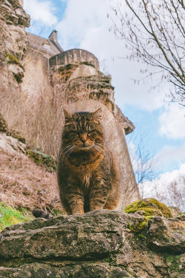 Beautiful cat sitting on the castle ruins of LaRochette in Luxembourg. #cats #Luxembourg #castle