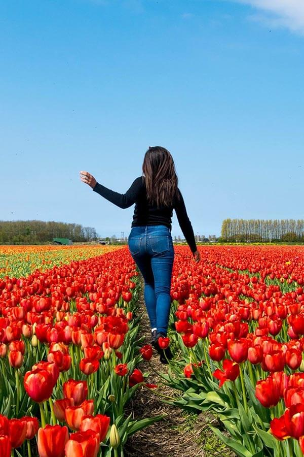 Girl enjoying the tulip fields outside of Amsterdam in early May.
