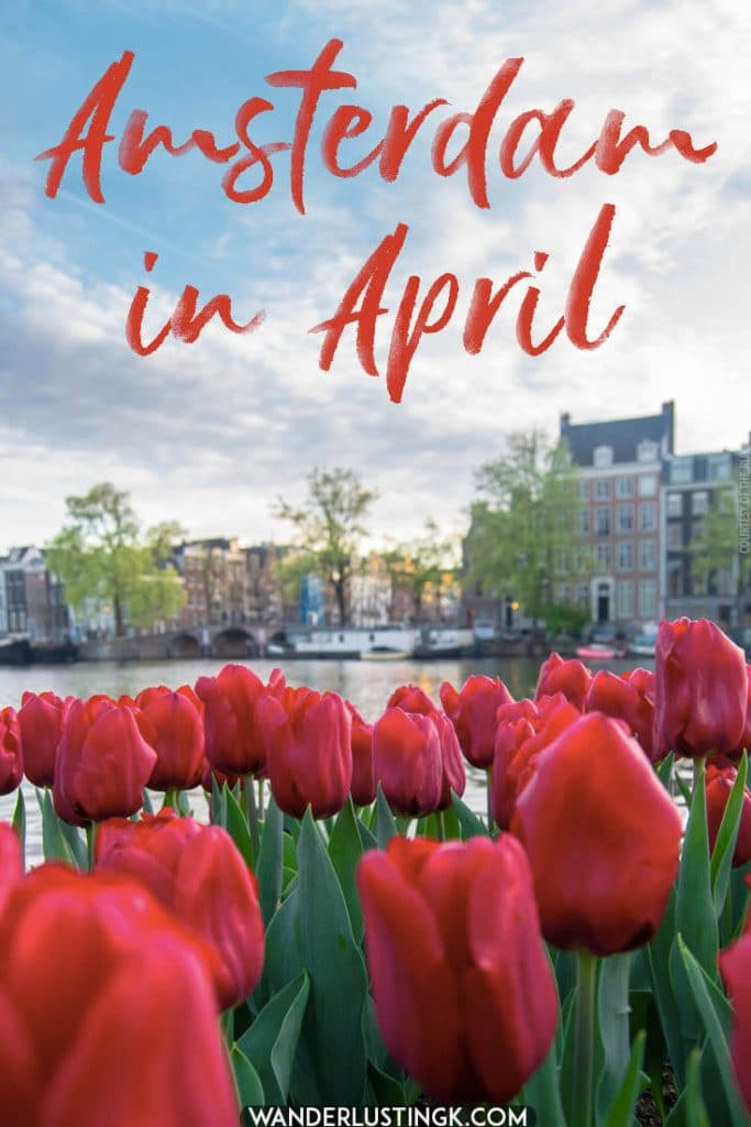 The best time of the year to visit Amsterdam is in April.  This is when you can see tulips throughout the city center. Read insider tips for the best events and what to wear in Amsterdam in April! #travel #amsterdam #holland #netherlands
